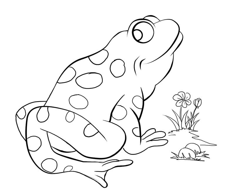 free coloring pages of a frog in a pond az coloring pages