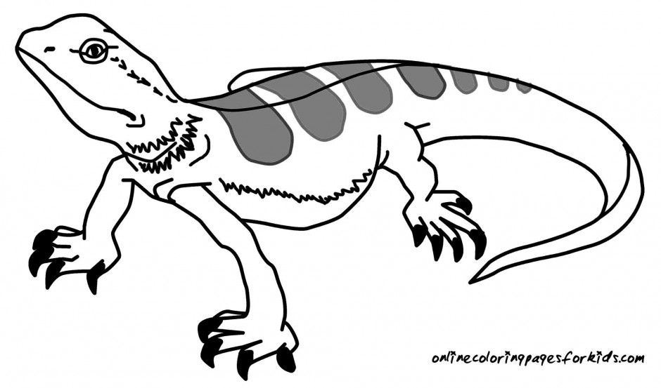 lizard coloring pages 185012 lizard coloring pages az coloring pages
