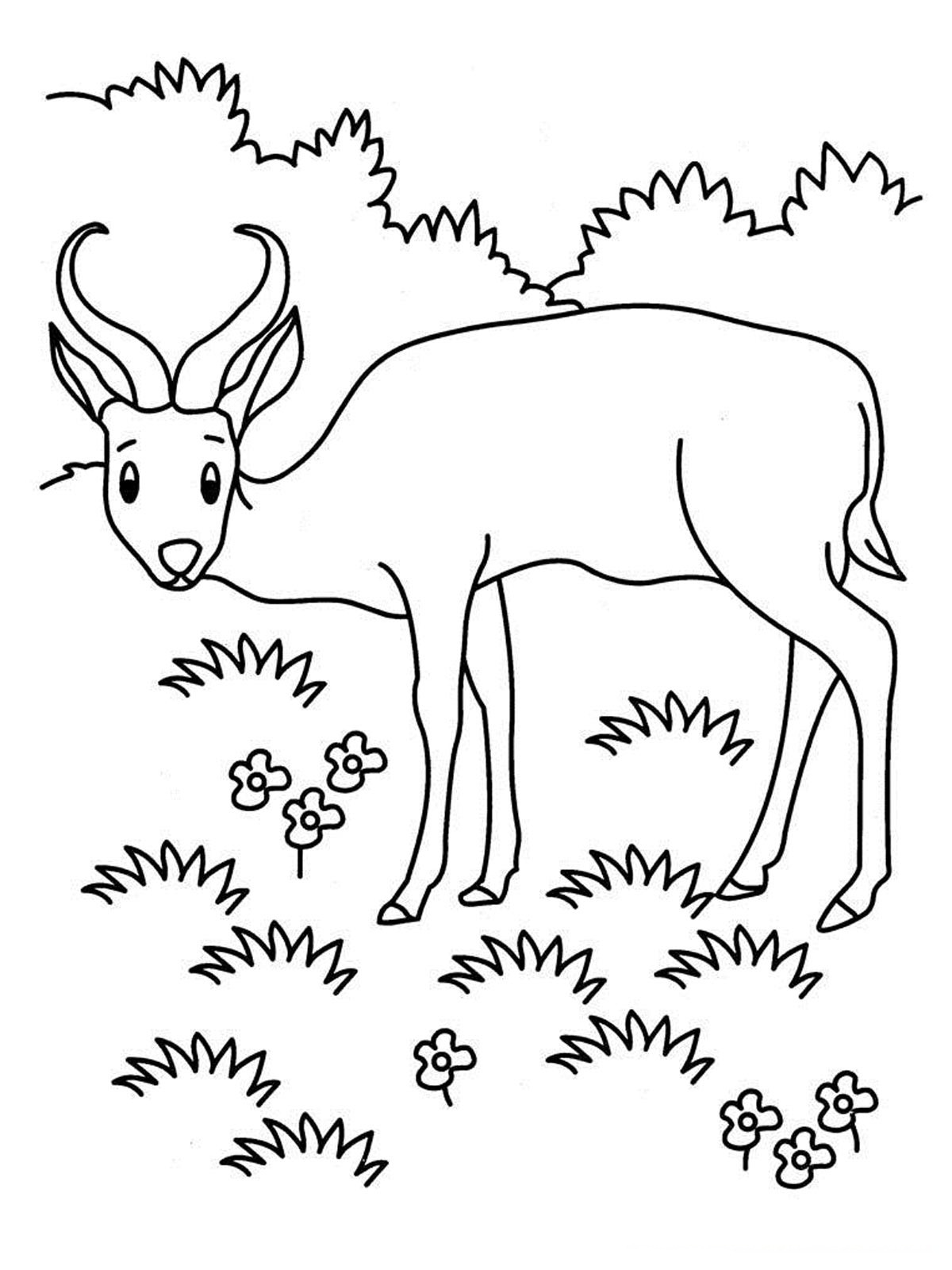 Grassland Coloring Pages