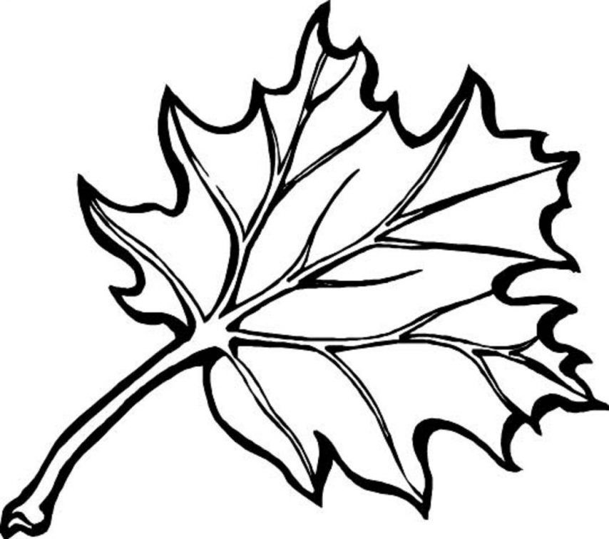 fall leaves coloring pages coloring pages for kids