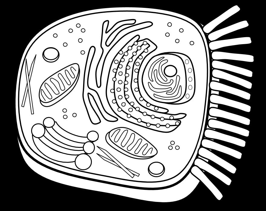 coloring page plant cell az coloring pages