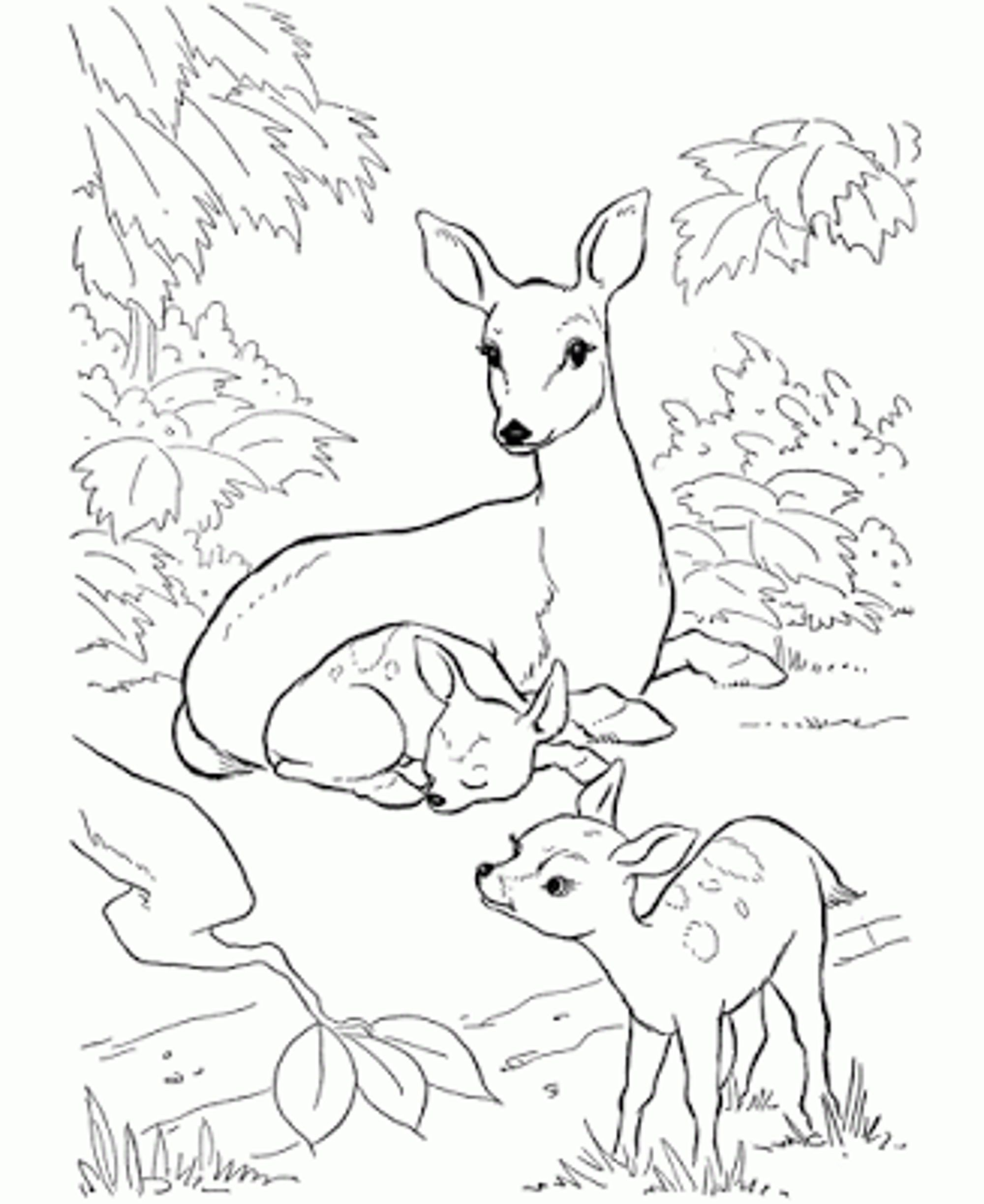 coloring pages of baby deer coloring pages now