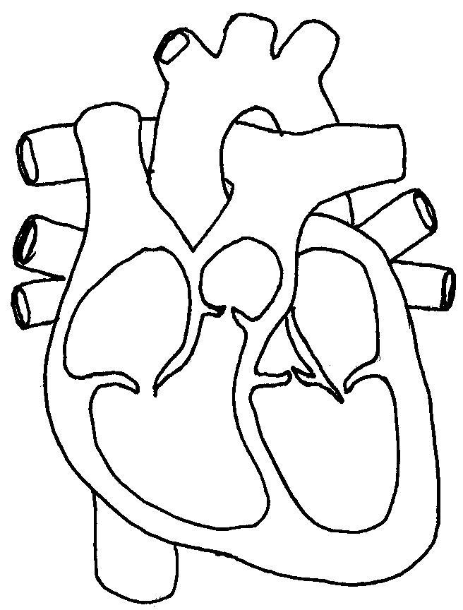 Worksheets Human Heart Worksheet human heart color page 205 free printable coloring printable