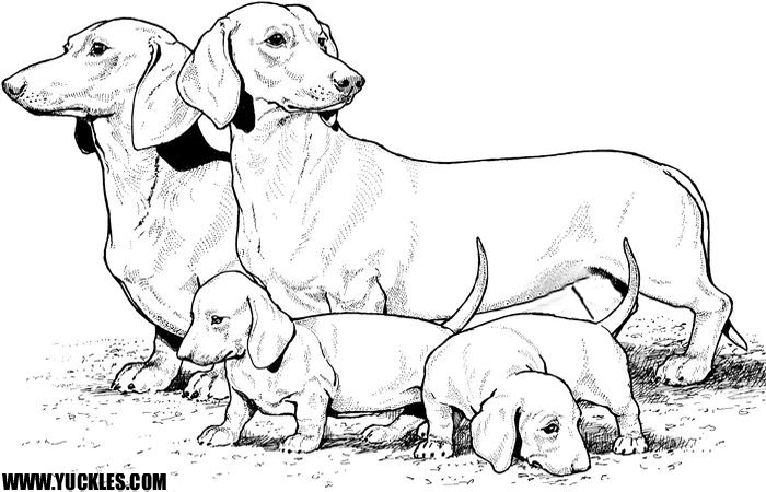dachshund coloring pages az coloring pages