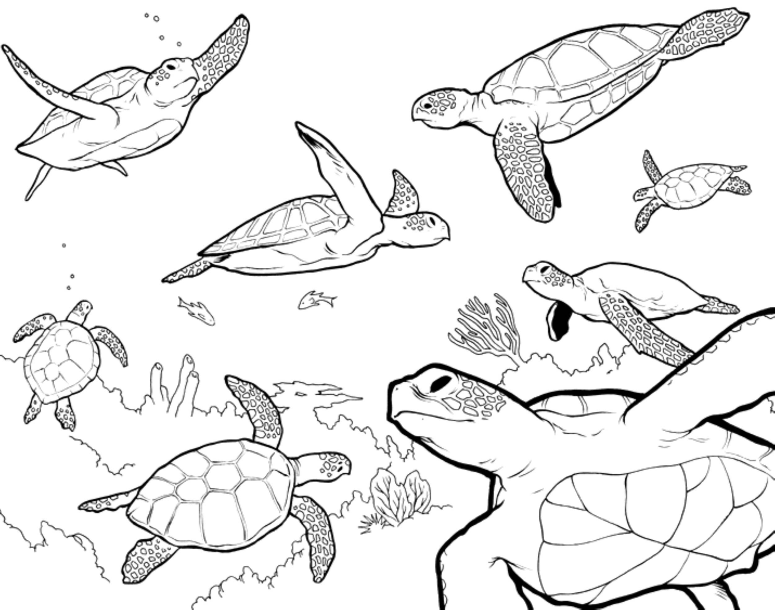 Coloring Pages Sea Turtle Printables