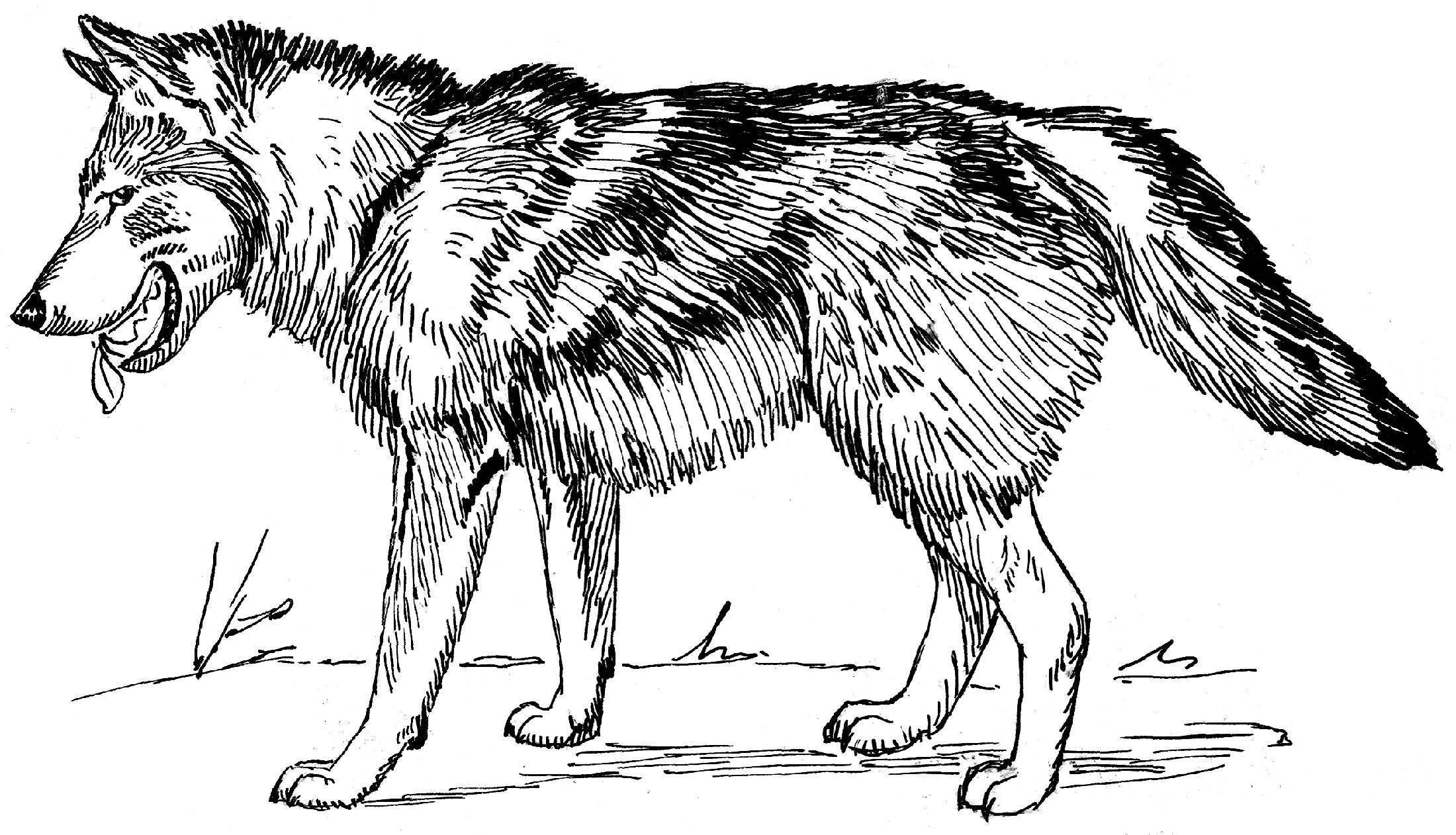 wolf coloring page for kids az coloring pages