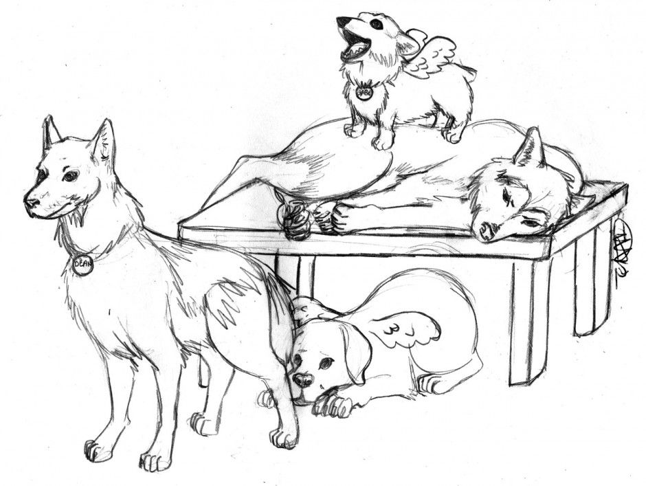 husky dog coloring pages cooloring com