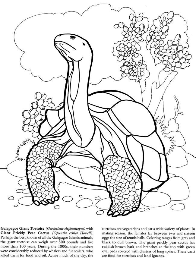 Tortoise Coloring Page Coloring Home