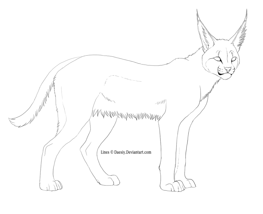 caracal coloring page az coloring pages