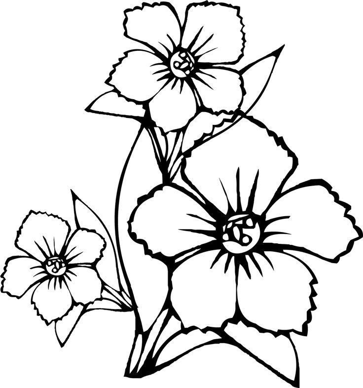 coloring pages of amazing flowers az coloring pages