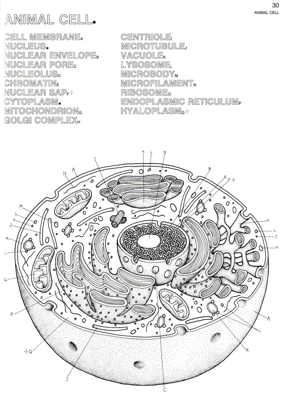 Plant And Animal Cell Coloring Page plant cell coloring page – Plant Cell Diagram Worksheet