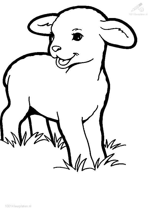 lamb coloring pages 5 free coloring page site