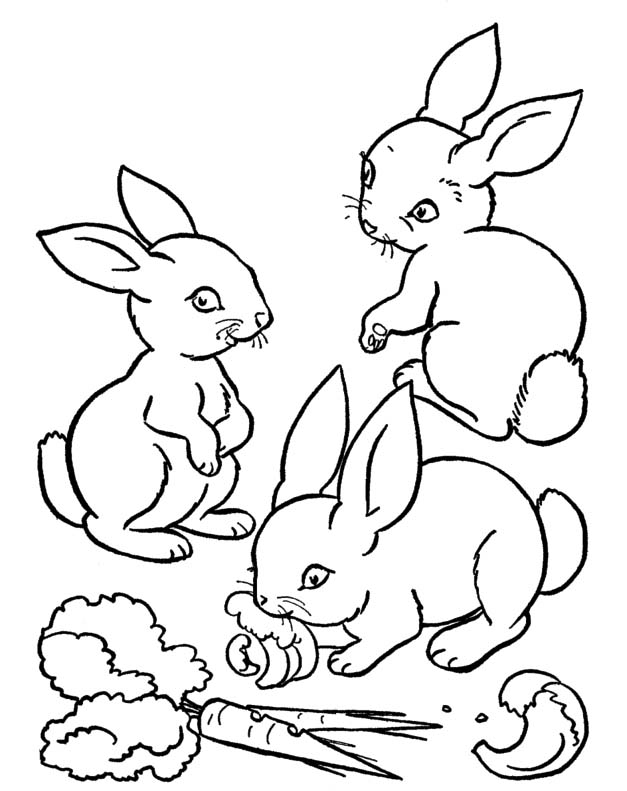rabbit who was eating a carrot coloring pages rabbit coloring