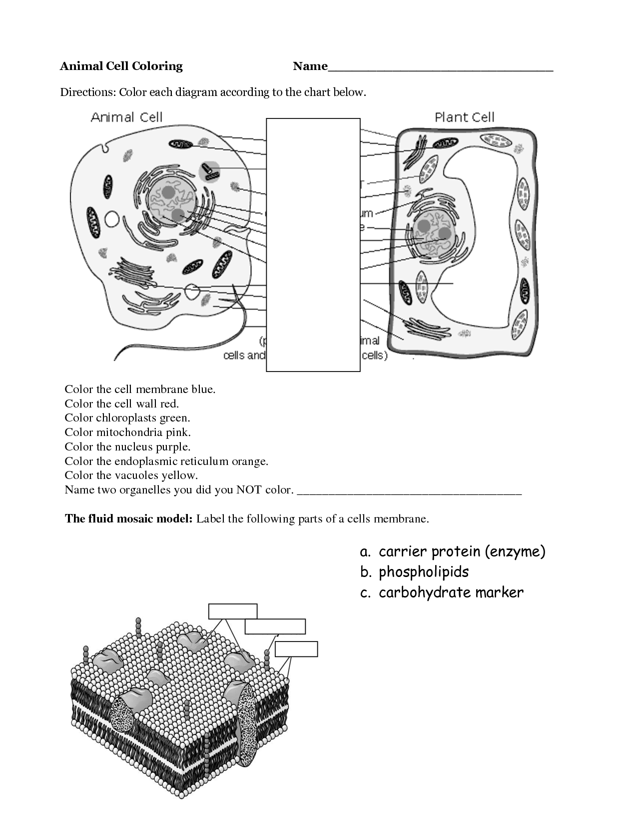 worksheet Animal And Plant Cells Worksheet phospholipids proteins and cholesterol first compartment formed plant az