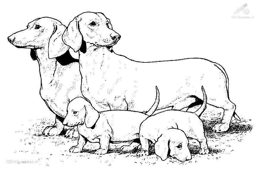 realistic dog coloring pages az coloring pages