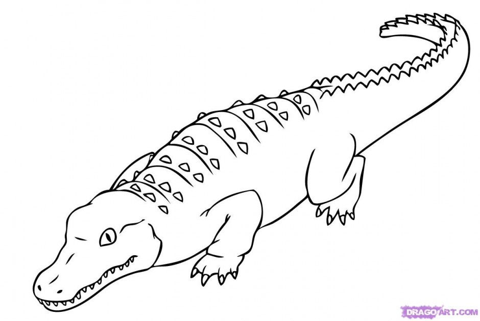 saltwater crocodile coloring pages cooloring com