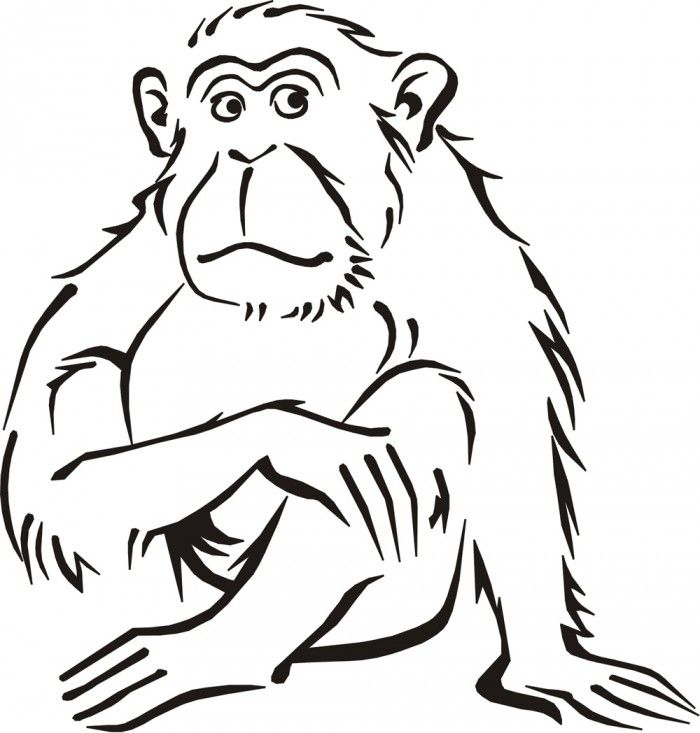 pictures of monkeys to color az coloring pages