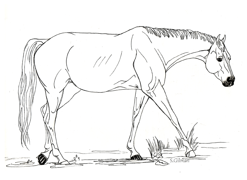 color in horses az coloring pages