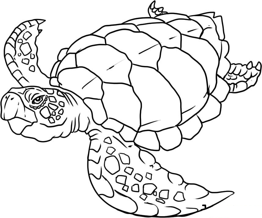 sea world coloring pages az coloring pages