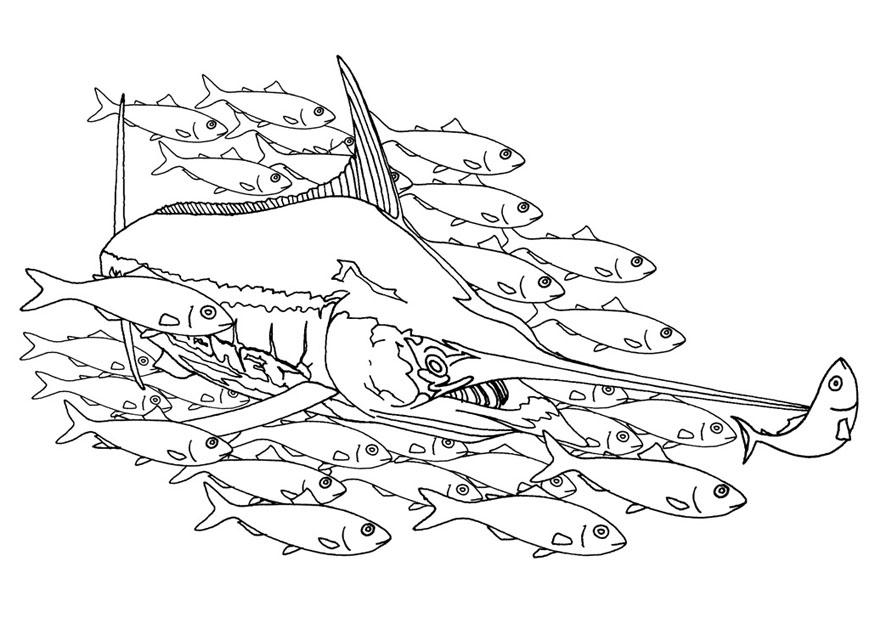 swordfish coloring page hallow coloring pages ideas