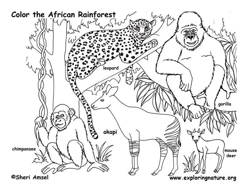 rain forest animals coloring pages free printable coloring pages