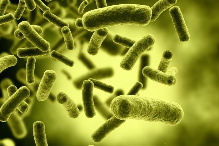 20140618alberlok-a-szervezetben-a-bakteriumok1.jpg