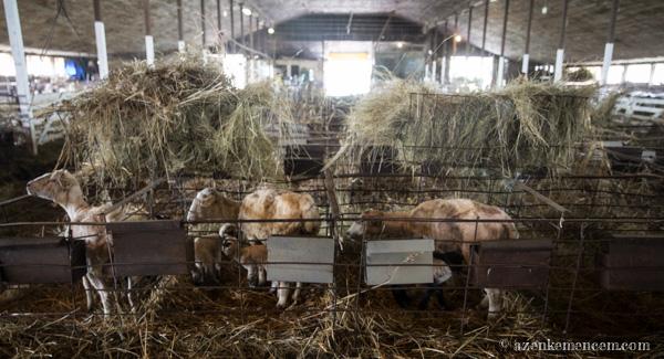 Juh hodály - keleméri Széki puszta tanya