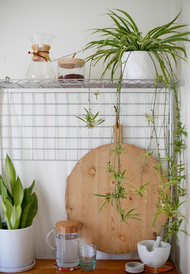 spider-plant-kitchen