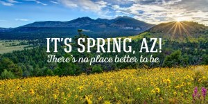 Image result for arizona spring time
