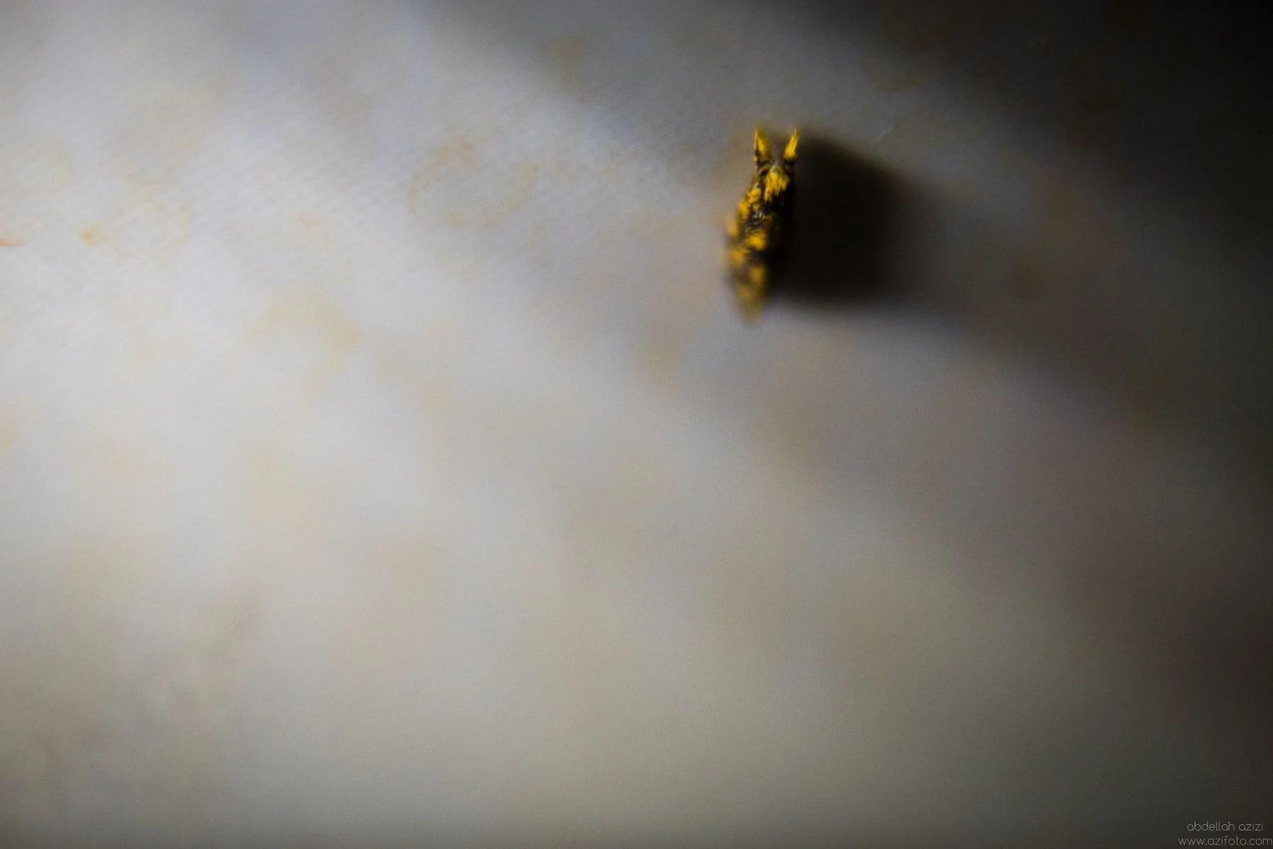 Clos up of qn insect, abdellah azizi photography