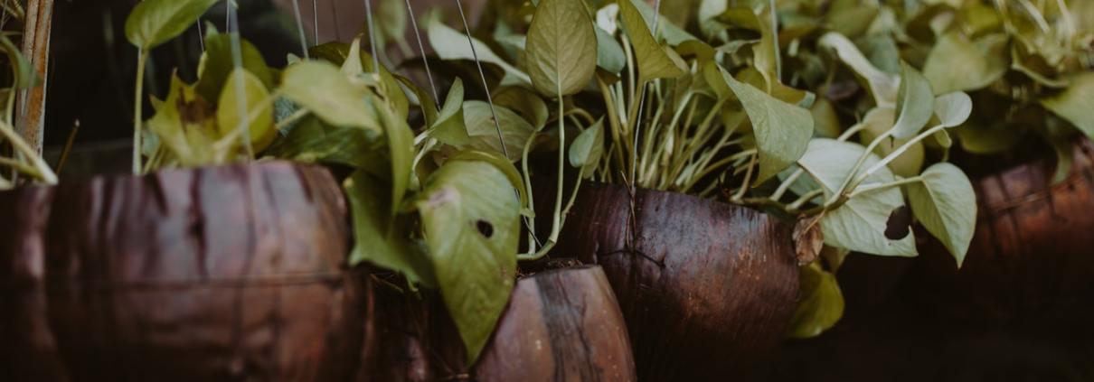 beneficiile plantelor din apartament