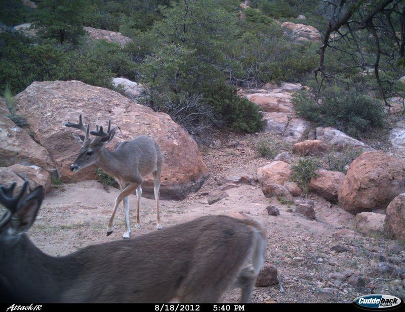 Deer 02 8 12