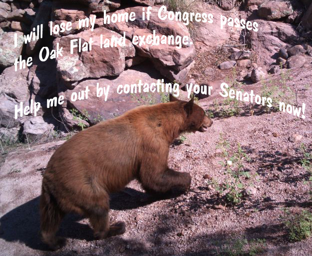 Contact the Senate to remove Oak Flat land exchange from the National Defense Authorization Act