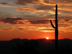 Beautiful Arizona sunset and a cactus.