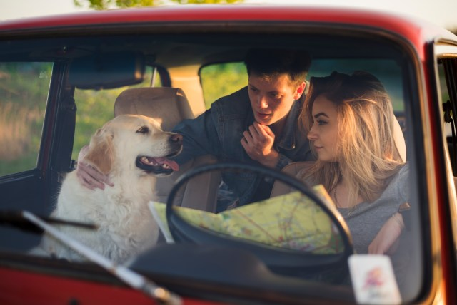 Couple and a dog in a car
