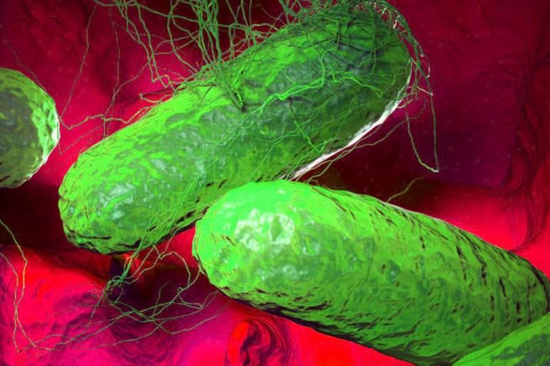 التيفوس (مرض): الأسباب والأعراض والعلاج   عشتار