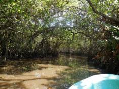 Tecolutla Manglares Mangroves