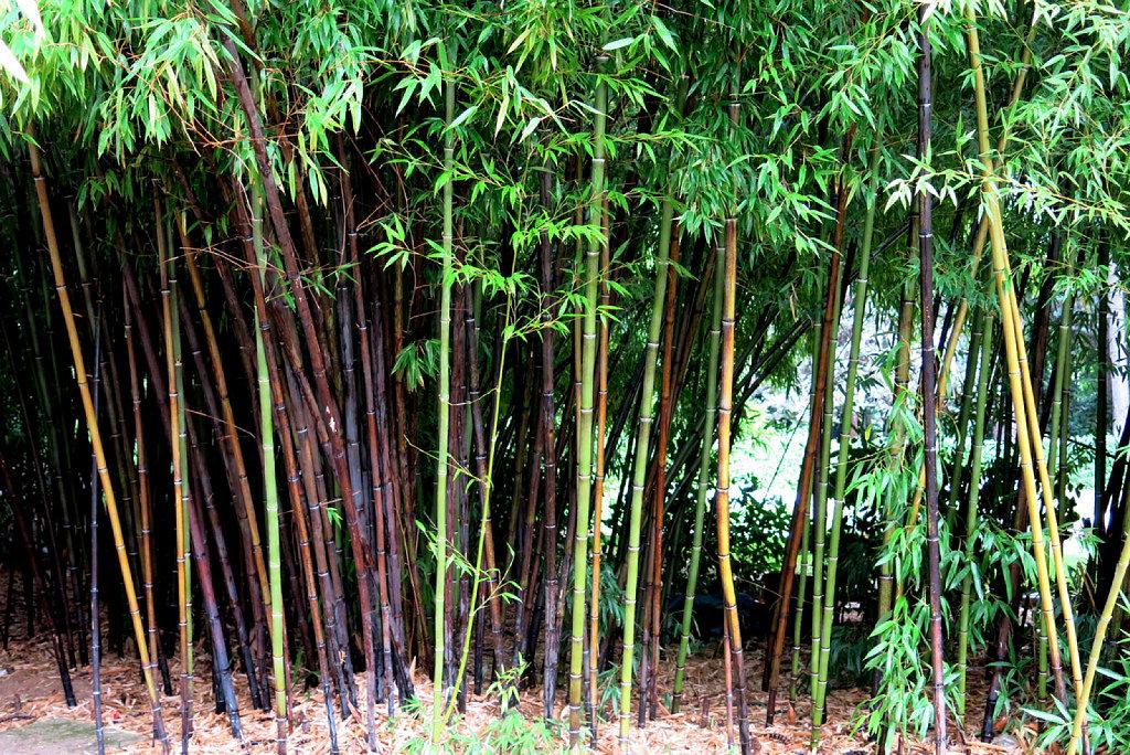 Caracter sticas de los jardines tropicales comercializadora hort cola - Jardin de bambu talavera ...