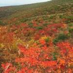安達太良山紅葉時期