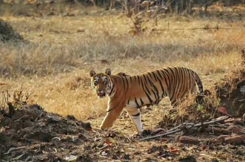 Tadoba National Park Guide4 - Azure Sky Follows