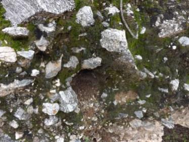 Moss-on-rock