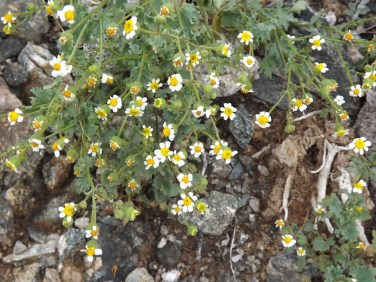 SouthMountain-flowers1