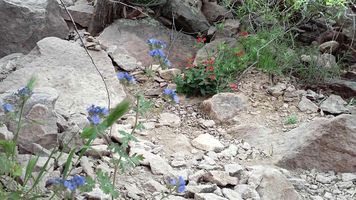 Superstition-flowers-6