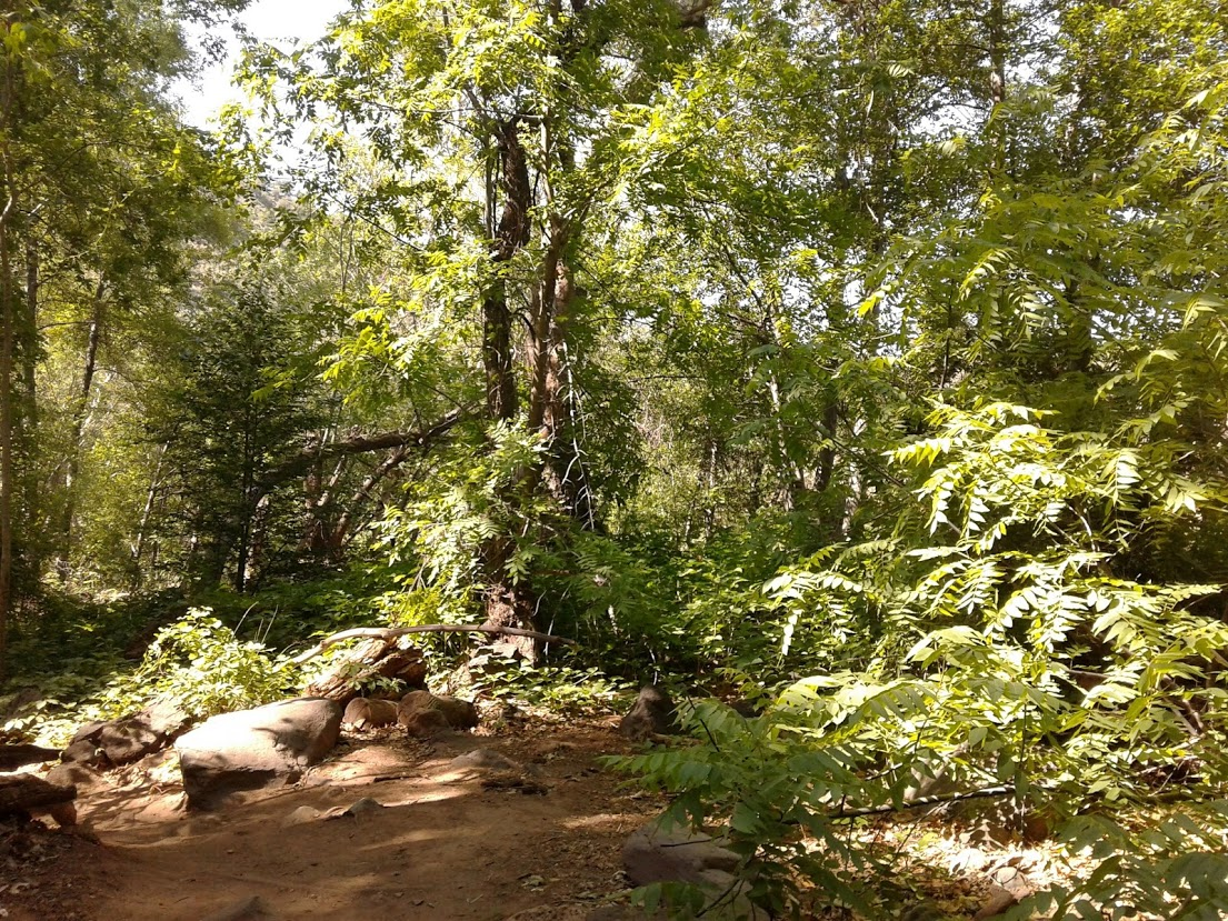 Lush forest on the banks of Fossil Creek