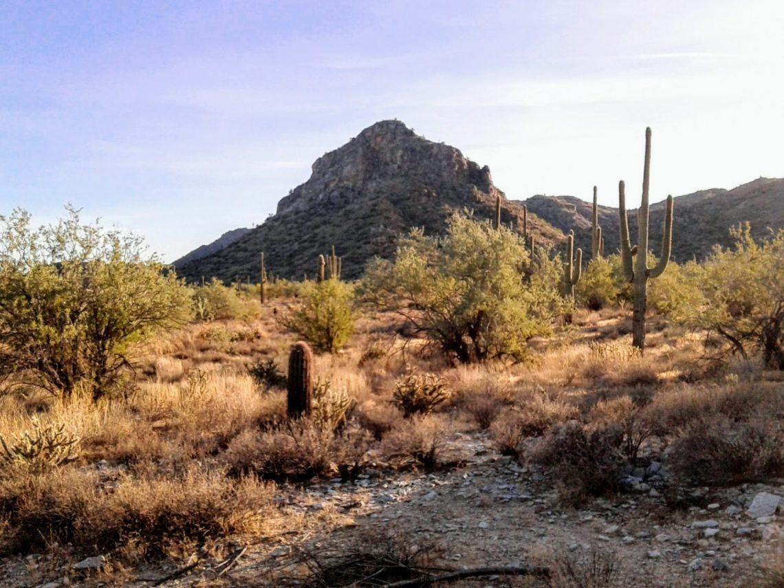 Saguaro and barrel cactus plants in a desert landscape