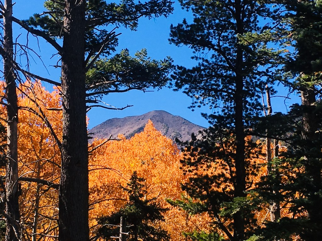 Mount Humphreys Peak with aspen trees in foreground