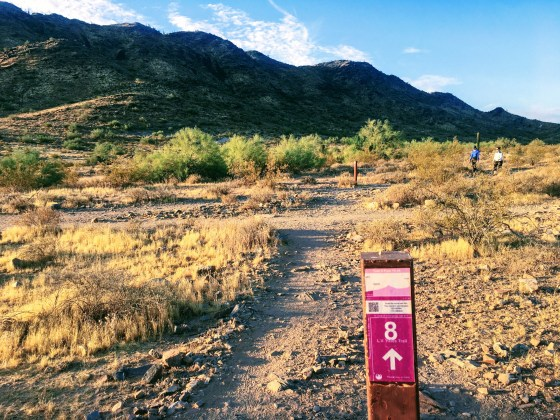 Quartz Ridge Trail #8 in Phoenix Mountains Preserve