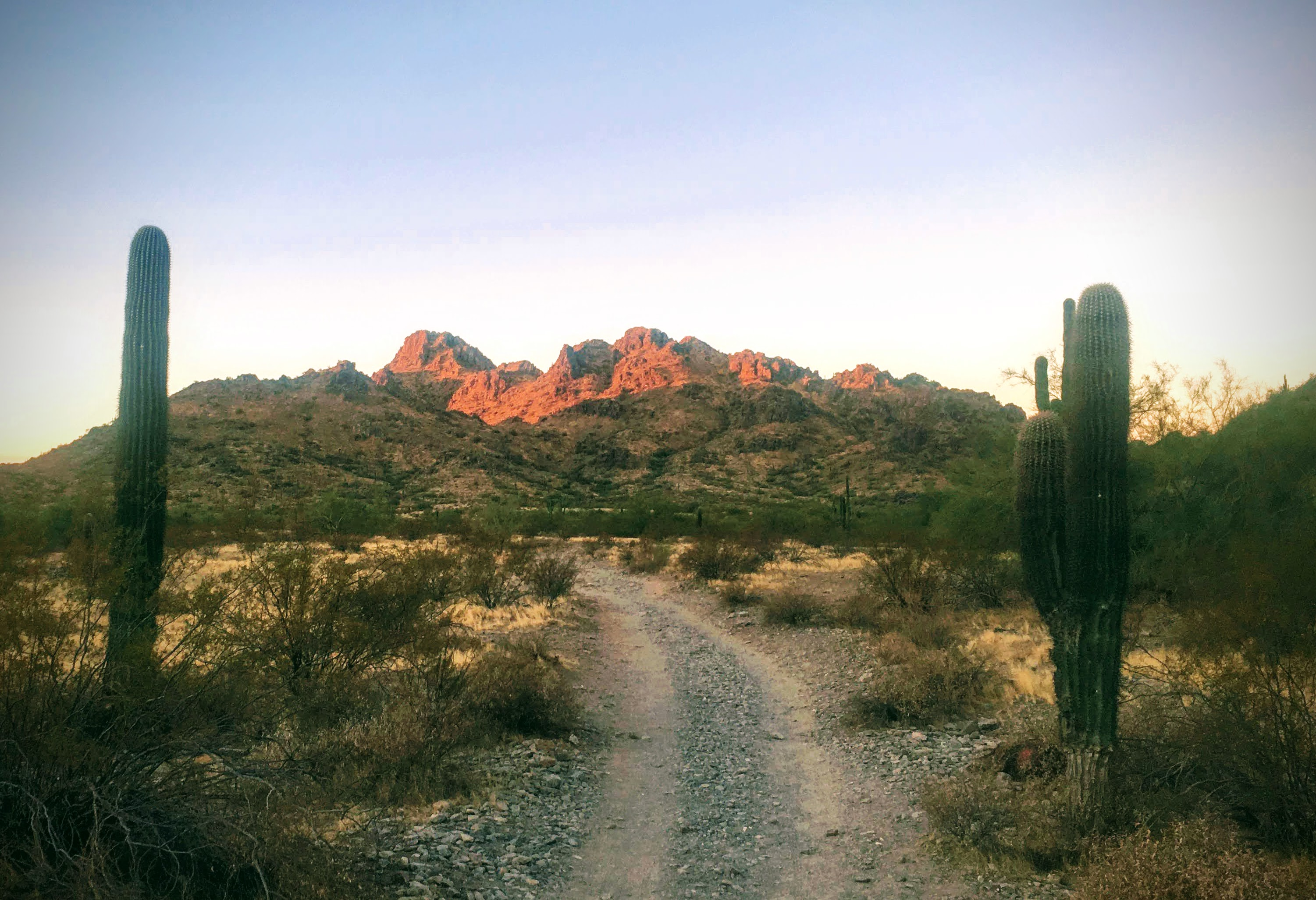 trail between two cactuses with mountain in background