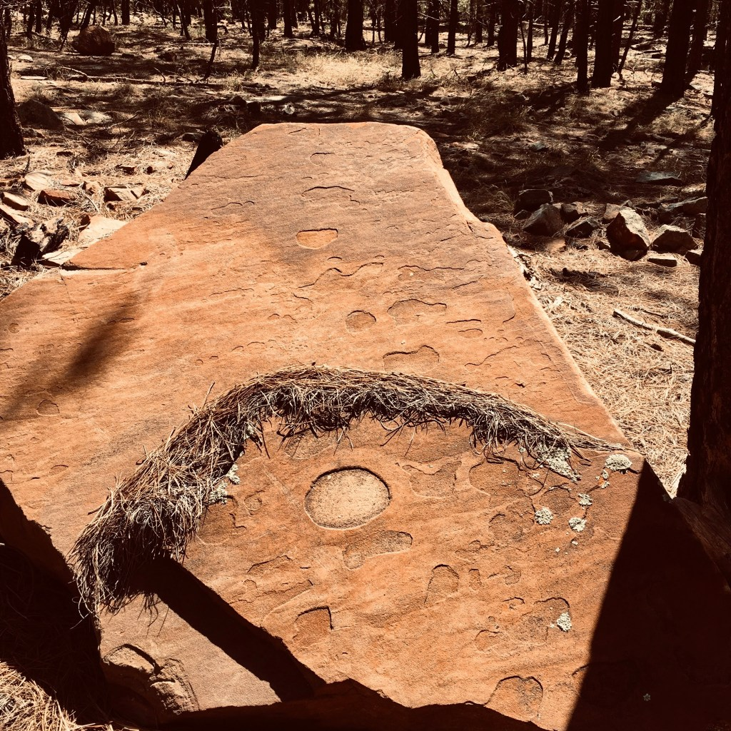 large rock with circles and arched gathering of pine needles
