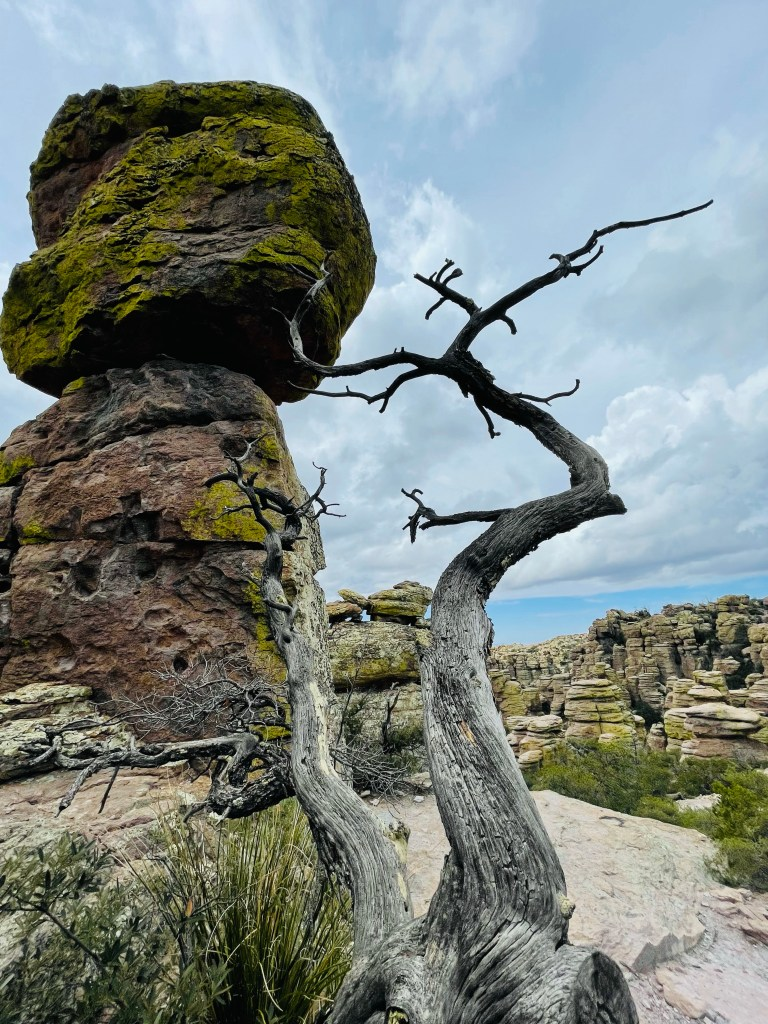 rock column rises higher than remains of a tree